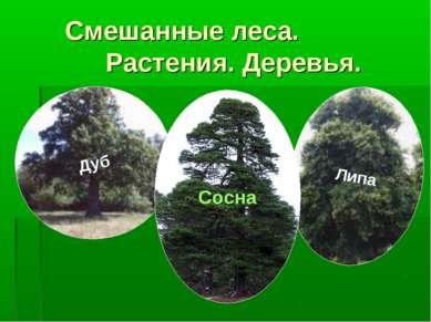 Смешанные леса. Растения. Деревья. Дуб Липа Сосна