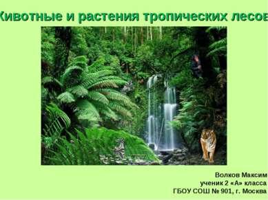 Животные и растения тропических лесов. Волков Максим ученик 2 «А» класса ГБОУ...