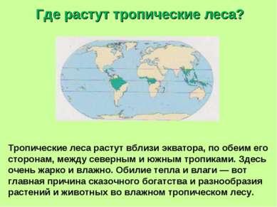 Где растут тропические леса? Тропические леса растут вблизи экватора, по обеи...