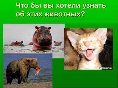 Что бы вы хотели узнать об этих животных?