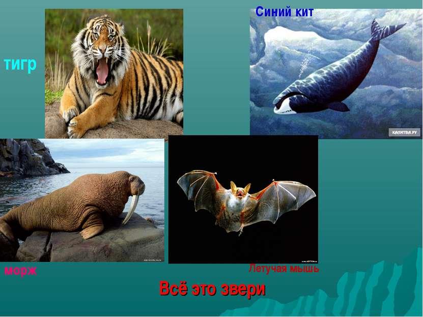 Всё это звери тигр Синий кит морж Летучая мышь