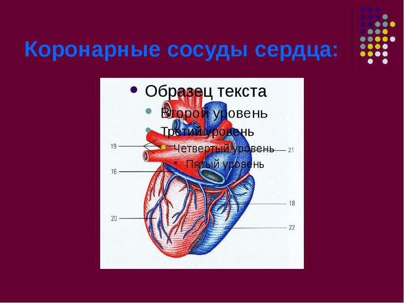 Коронарные сосуды сердца: