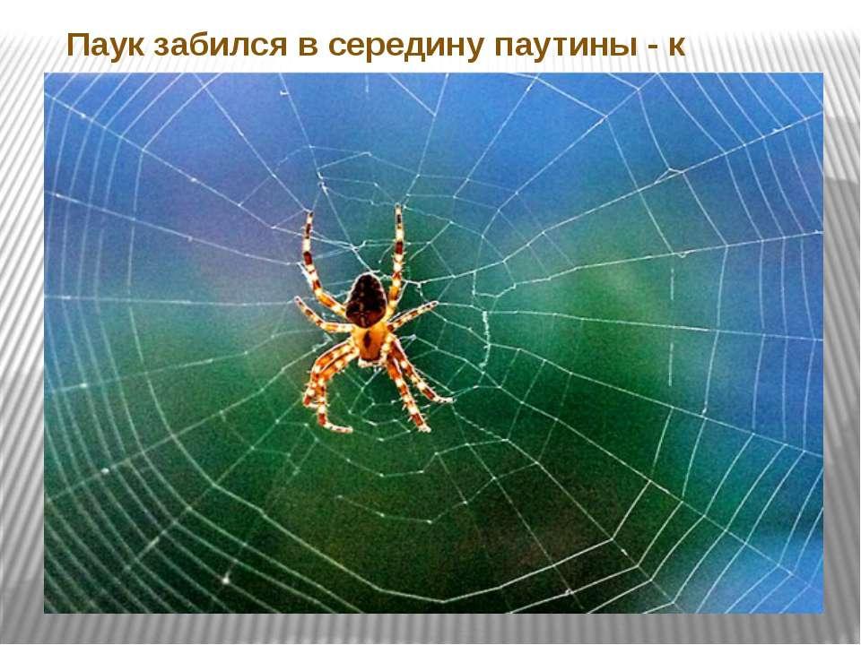 Паук забился в середину паутины - к ненастью