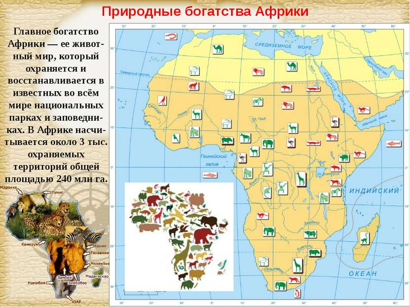 Природные богатства Африки Главное богатство Африки — ее живот-ный мир, котор...