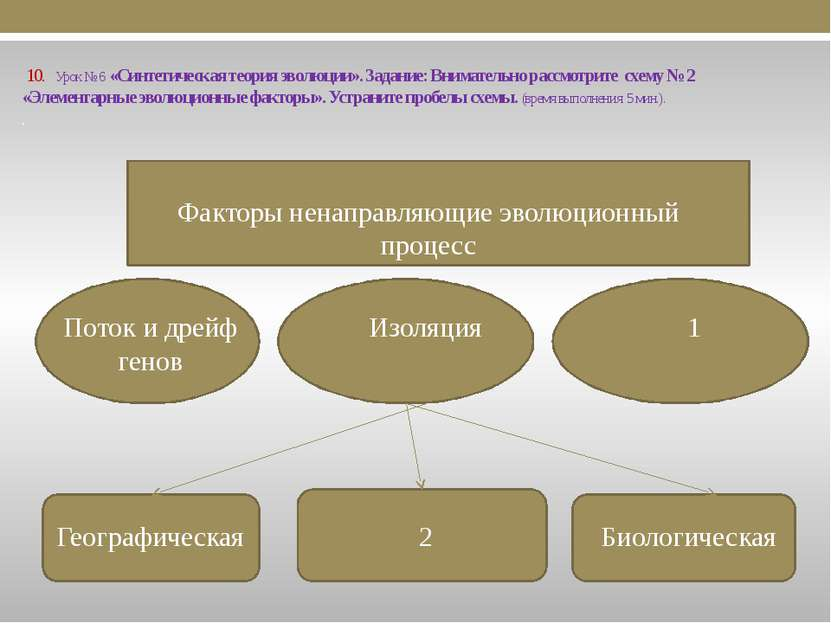 10. Урок № 6 «Синтетическая теория эволюции». Задание: Внимательно рассмотрит...