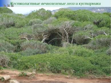 Жестколистные вечнозеленые леса и кустарники