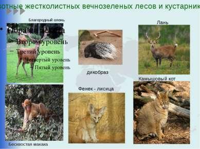 Благородный олень Камышовый кот Лань Животные жестколистных вечнозеленых лесо...