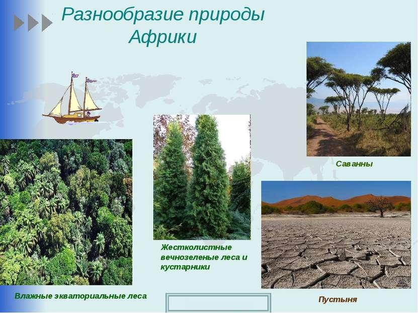 Разнообразие природы Африки Влажные экваториальные леса Пустыня Саванны Жестк...