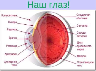 Наш глаз!
