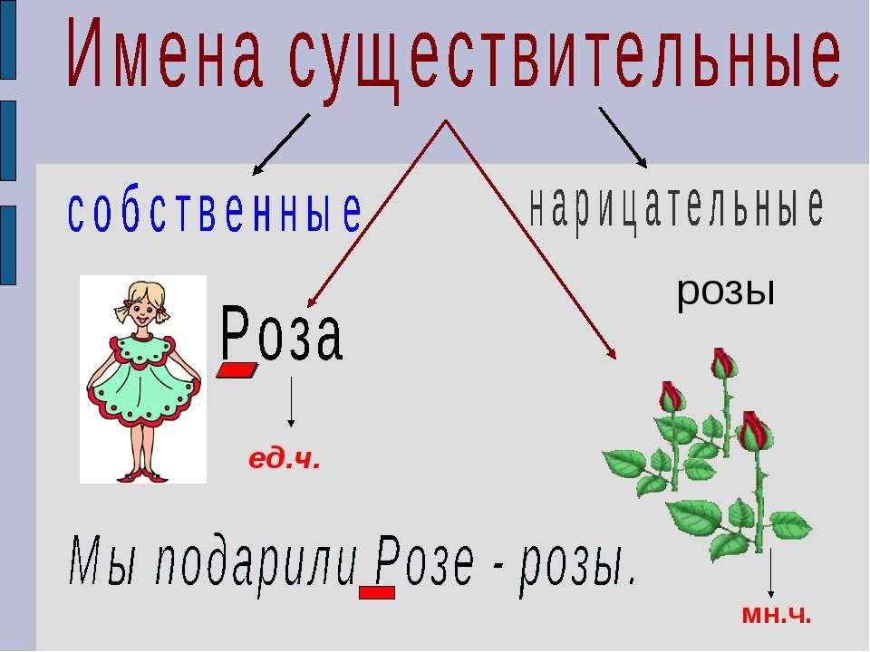 розы ед.ч. мн.ч.