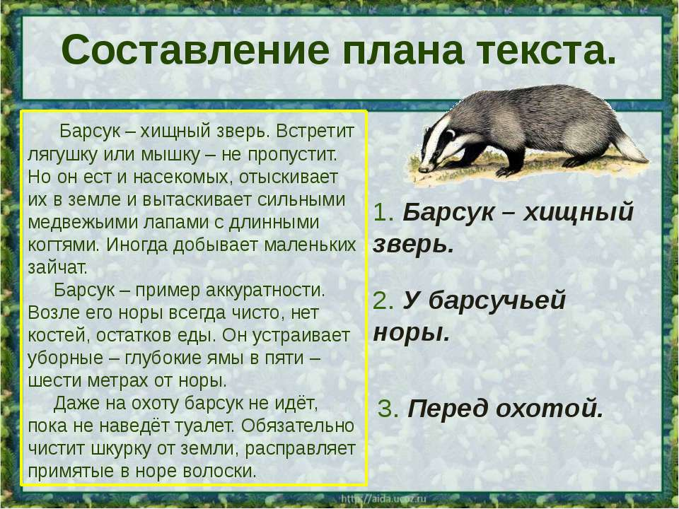 Составление плана текста. Барсук – хищный зверь. Встретит лягушку или мышку –...