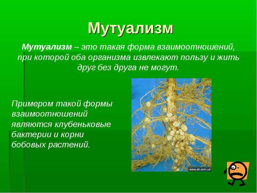 Мутуализм Мутуализм – это такая форма взаимоотношений, при которой оба органи...