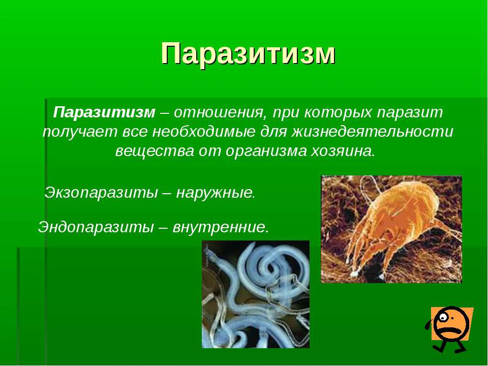 Паразитизм Паразитизм – отношения, при которых паразит получает все необходим...