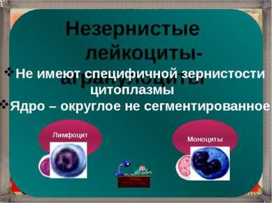 Незернистые лейкоциты-агранулоциты Не имеют специфичной зернистости цитоплазм...