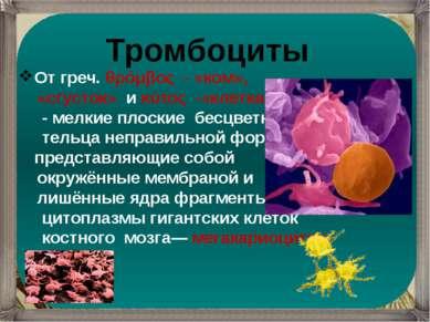 Тромбоциты От греч. θρόμβος - «ком», «сгусток» и κύτος -«клетка» - мелкие ...