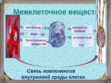 Межклеточное вещество Связь компонентов внутренней среды клетки кислород вода...