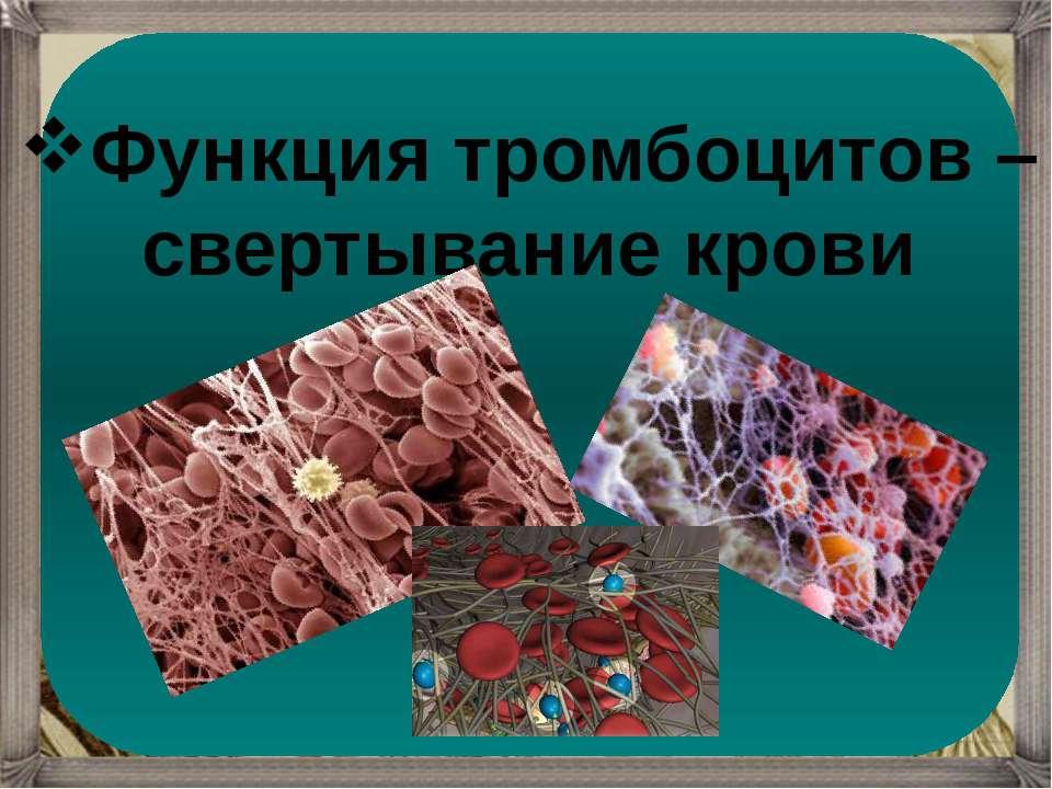 Функция тромбоцитов – свертывание крови