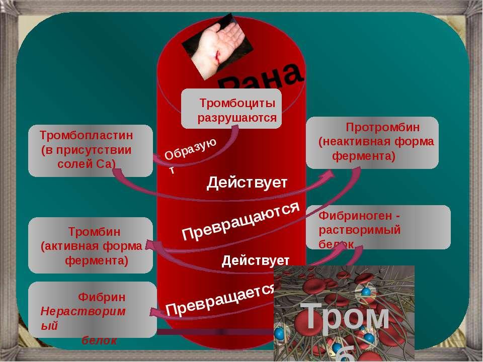 Рана Тромбоциты разрушаются Образуют Тромбопластин (в присутствии солей Са) Д...