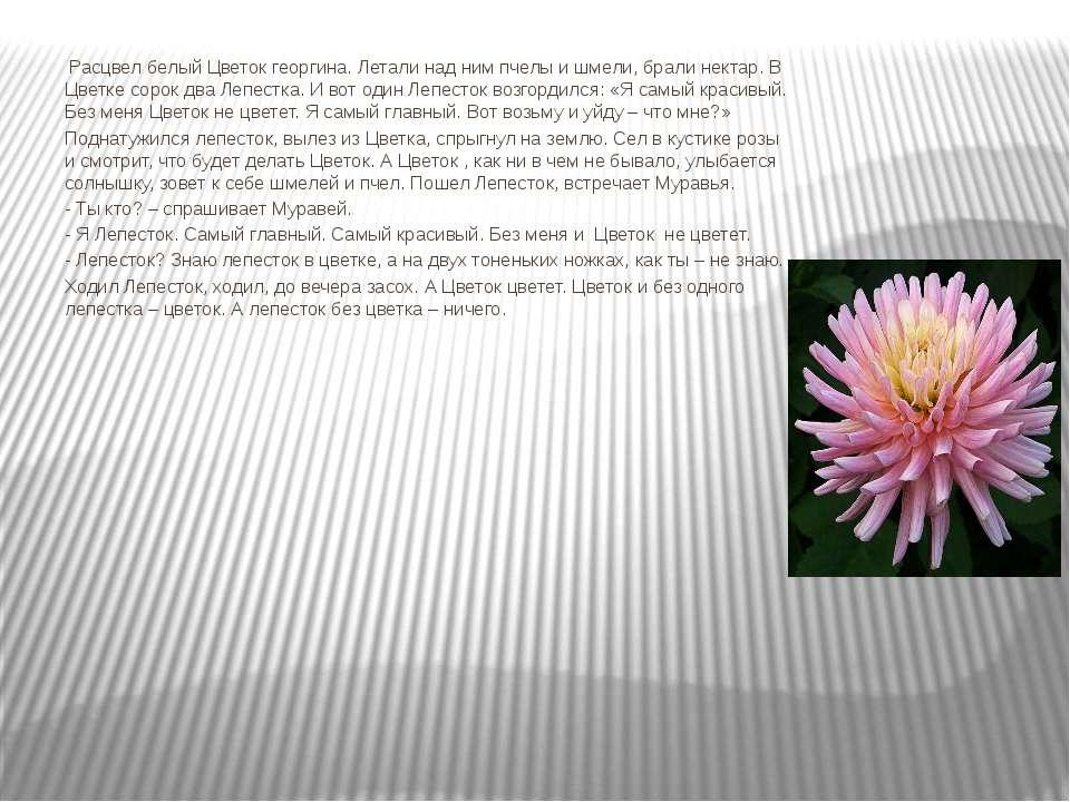 Расцвел белый Цветок георгина. Летали над ним пчелы и шмели, брали нектар. В ...