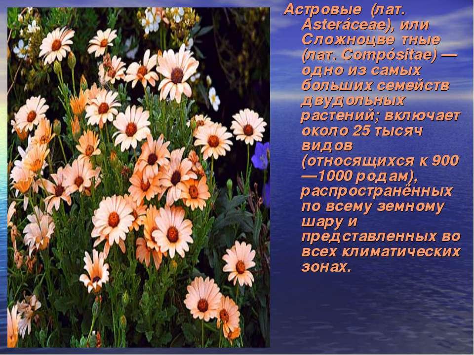 Астровые (лат. Asteráceae), или Сложноцве тные (лат. Compósitae) — одно из са...