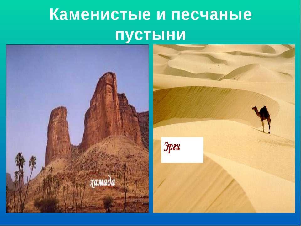 Каменистые и песчаные пустыни