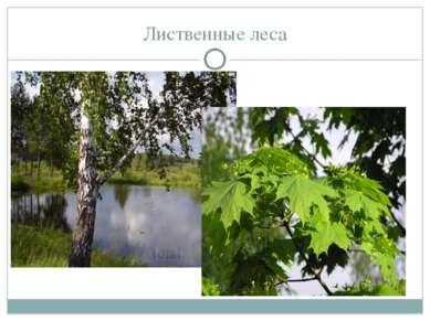 Лиственные леса