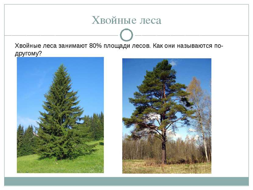 Хвойные леса Хвойные леса занимают 80% площади лесов. Как они называются по-д...