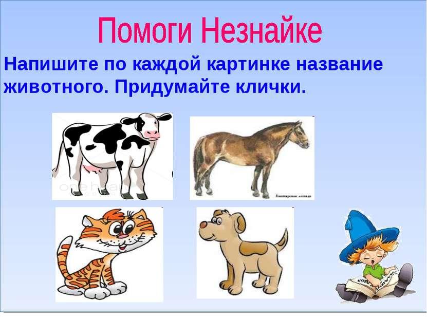 Напишите по каждой картинке название животного. Придумайте клички.
