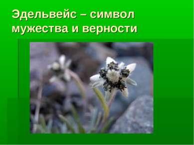 Эдельвейс – символ мужества и верности