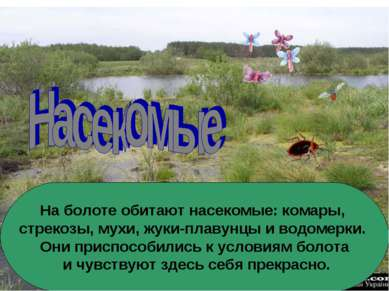 На болоте обитают насекомые: комары, стрекозы, мухи, жуки-плавунцы и водомерк...