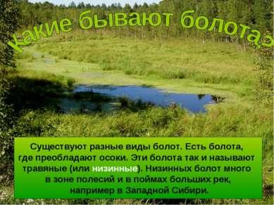 Существуют разные виды болот. Есть болота, где преобладают осоки. Эти болота ...