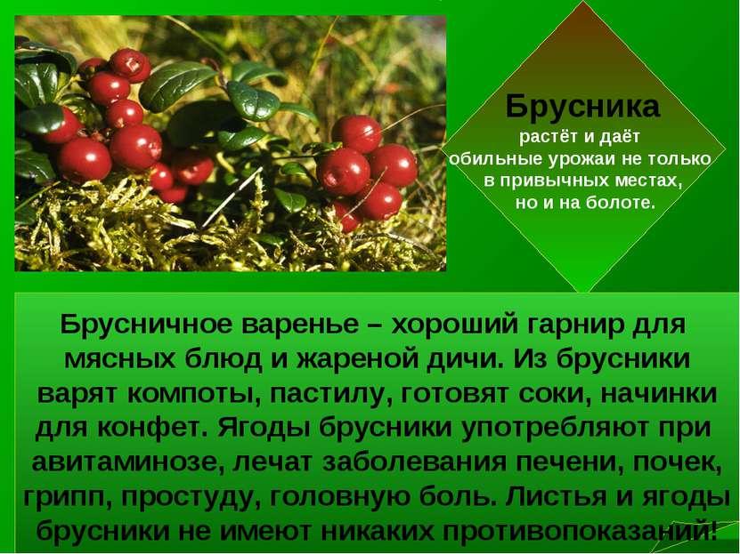 Брусника растёт и даёт обильные урожаи не только в привычных местах, но и на ...