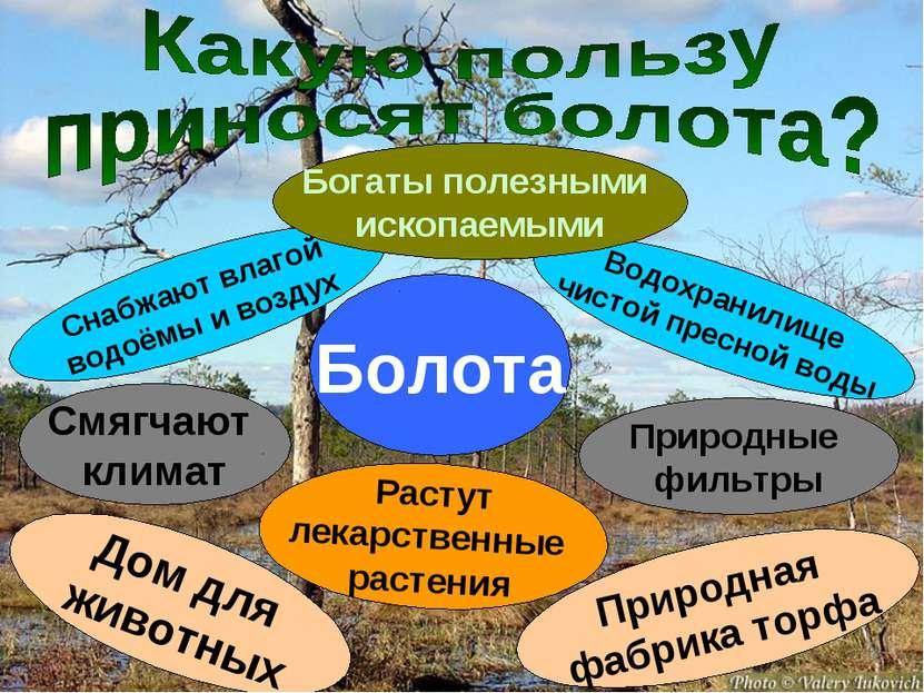 Болота Снабжают влагой водоёмы и воздух Водохранилище чистой пресной воды Смя...