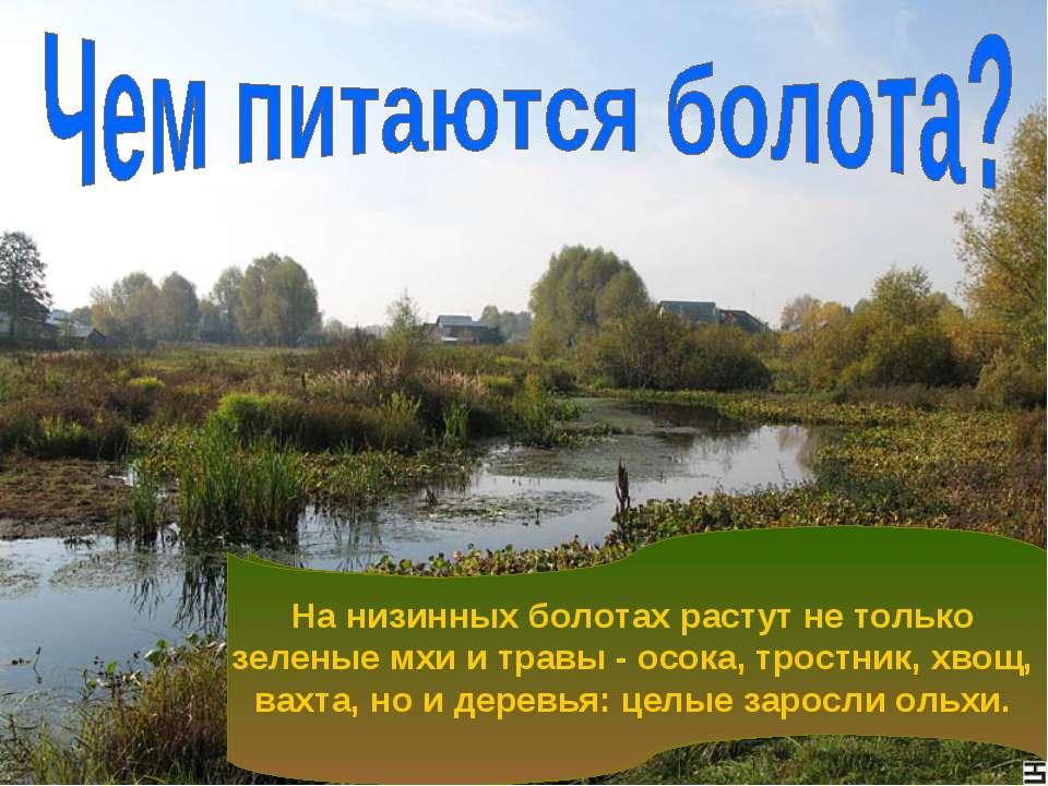 Низинные болота имеют вогнутую или ровную поверхность. Такое расположение бол...