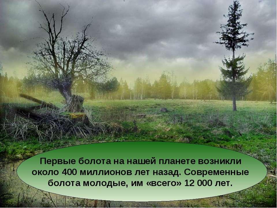 Первые болота на нашей планете возникли около 400 миллионов лет назад. Соврем...