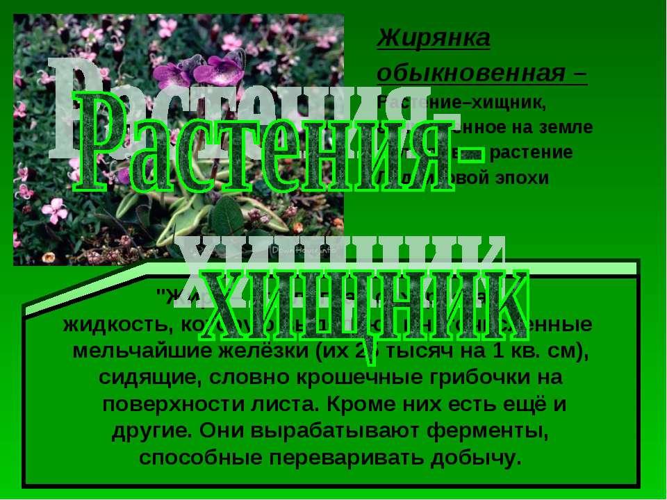 Жирянка обыкновенная – Растение–хищник, единственное на земле реликтовое раст...