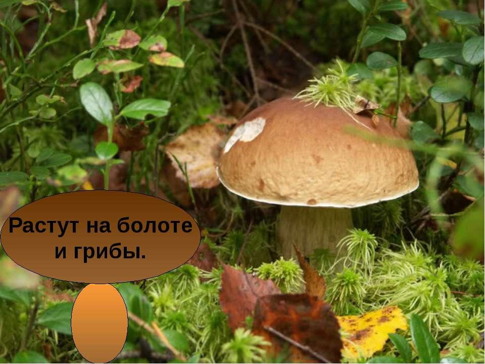 Растут на болоте и грибы.