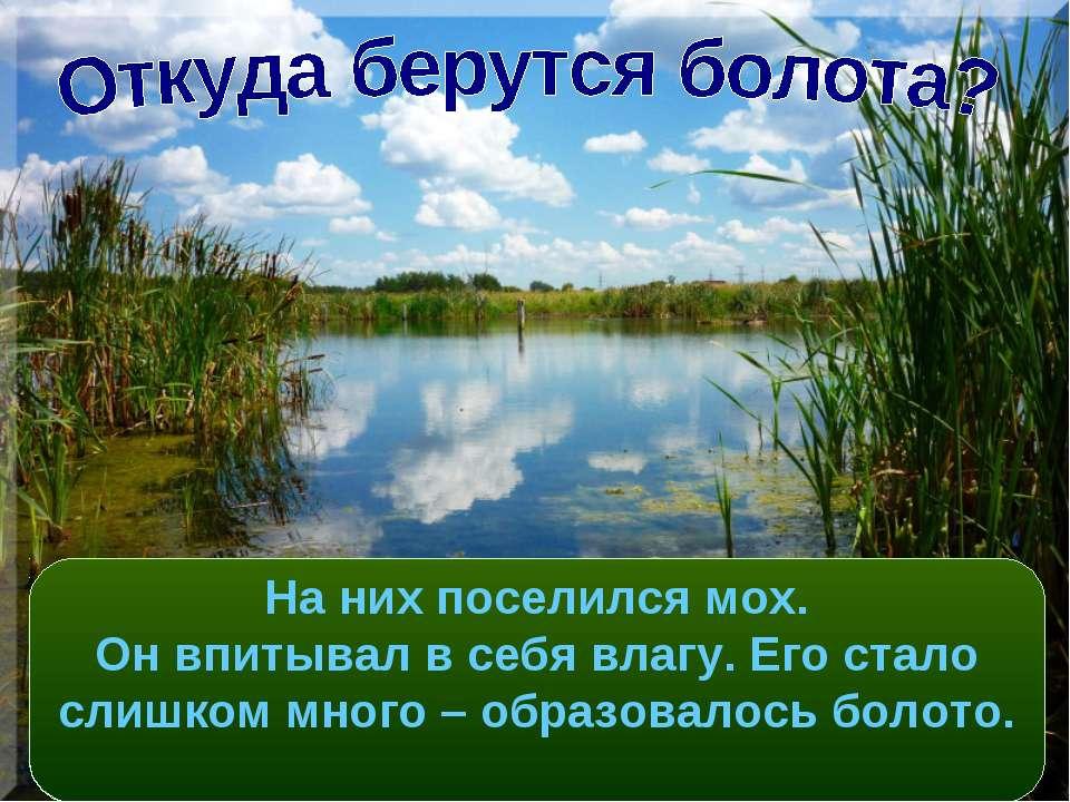 На месте болота могло быть небольшое озерцо или лесная речушка. Стебли у раст...