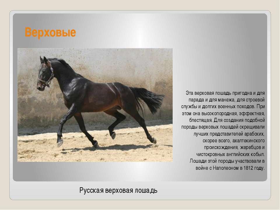 Верховые Эта верховая лошадь пригодна и для парада и для манежа, для строевой...
