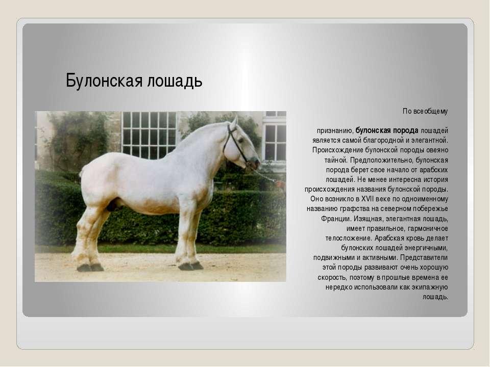 По всеобщему признанию,булонская порода лошадей является самой благородной и...
