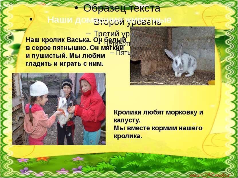 Наши домашние животные Наш кролик Васька. Он белый в серое пятнышко. Он мягки...