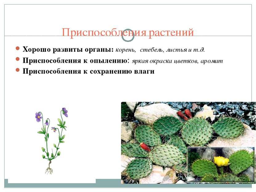 Приспособления растений Хорошо развиты органы: корень, стебель, листья и т.д....