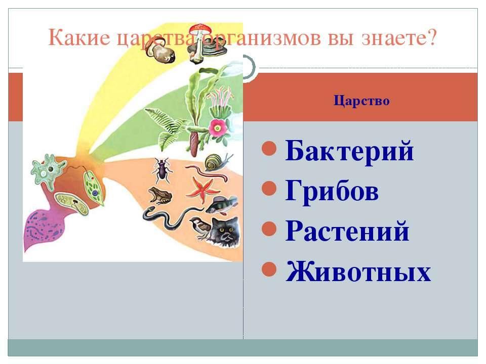 Царство Бактерий Грибов Растений Животных Какие царства организмов вы знаете?