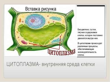 ЦИТОПЛАЗМА- внутренняя среда клетки Бесцветное, густое, тягучее содержимое кл...