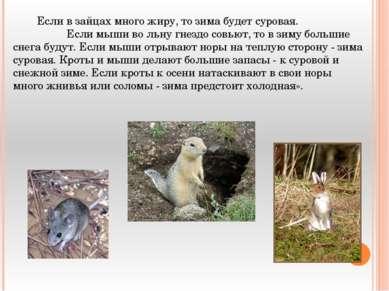Если в зайцах много жиру, то зима будет суровая. Если мыши во льну гнездо сов...