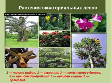 Растения экваториальных лесов 1 — пальма рафия; 2 — цекропия; 3 — тюльпановое...