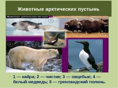 Животные арктических пустынь 1 — кайра; 2 — чистик; 3 — овцебык; 4 — белый ме...