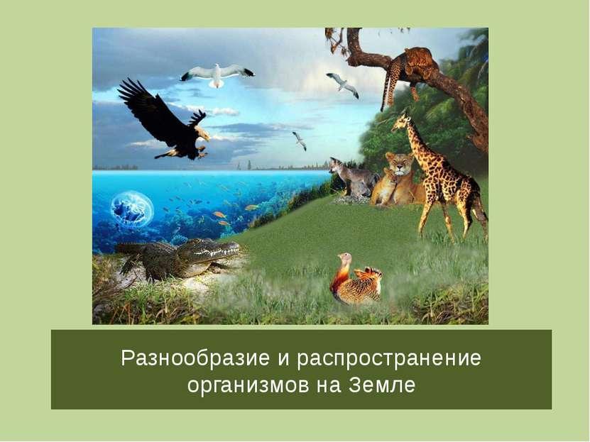 Разнообразие и распространение организмов на Земле