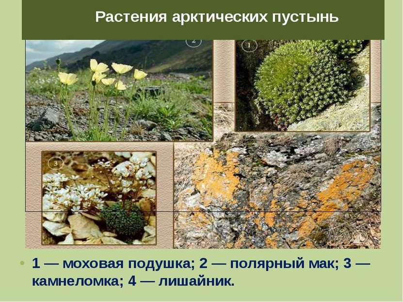 1 — моховая подушка; 2 — полярный мак; 3 — камнеломка; 4 — лишайник. Растения...