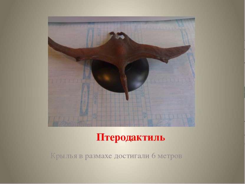 Птеродактиль Крылья в размахе достигали 6 метров